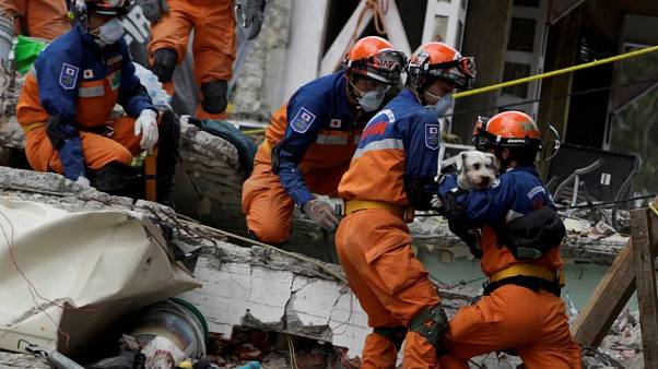 Dog found alive in rubble of Mexican quake