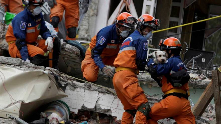 Dog found alive in rubble of Mexican quake