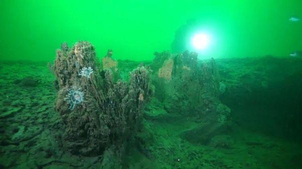 Alabama: Archaischer Unterwasserwald aufgetaucht
