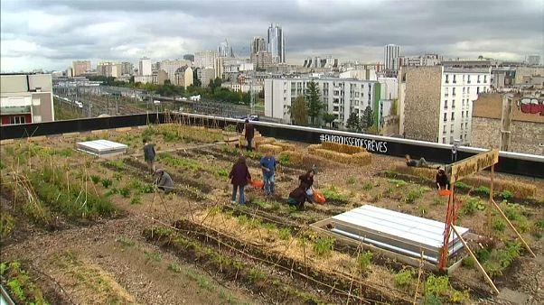 French posties transform Paris rooftop into picturesque farm
