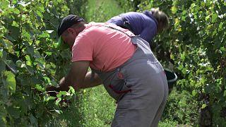Los intermediarios encarecen el coste de los trabajadores desplazados