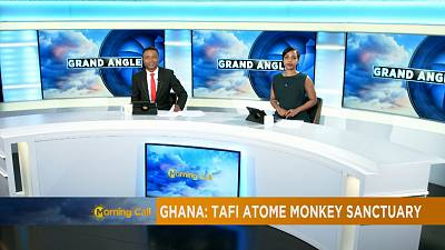 The Monkeys of Tafi Atome, Ghana [The Morning Call]