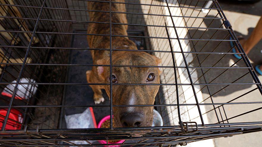 H κακοποίηση των ζώων και ο κύκλος της βίας