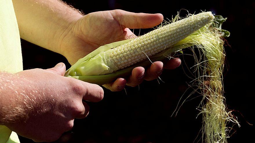 Monsanto banni du Parlement européen