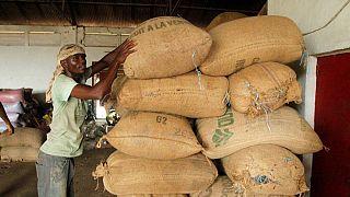 Ivory Coast sets cocoa farmers' pay at 700 CFA francs per kilo