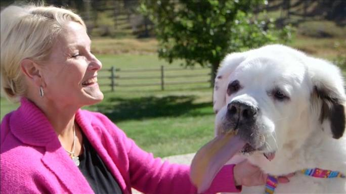 Mo the dog's huge tongue wins world record