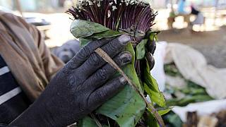 Somalia Bakool region bans khat for negative effect on al-Shabaab combat