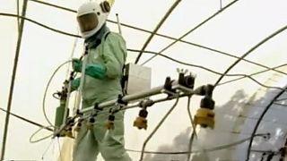 L'UE incertaine sur le glyphosate