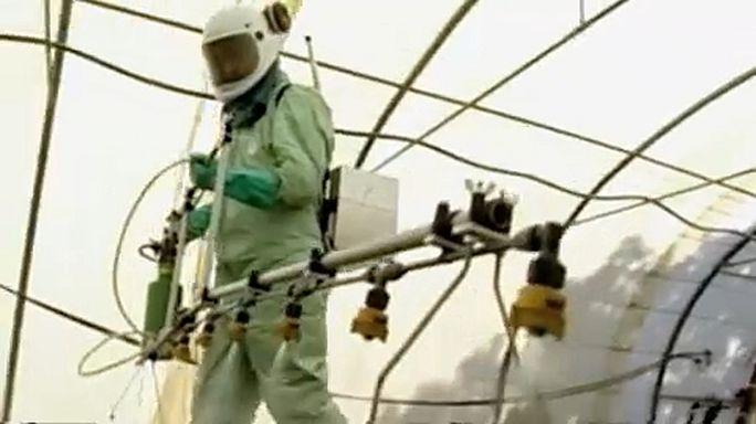 Glyphosat-Krise: Monsantos US-Kläger bei Brüsseler Anhörung