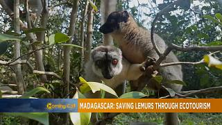 Madagascar's eco-tourism with Lemurs [The Morning Call]