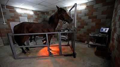 Libyan horses find new hospital