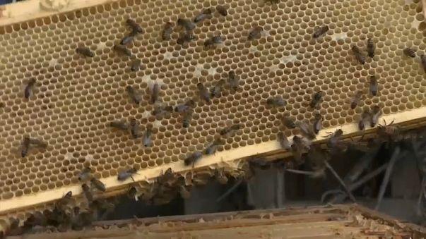 Honig ist mit Pestiziden verseucht