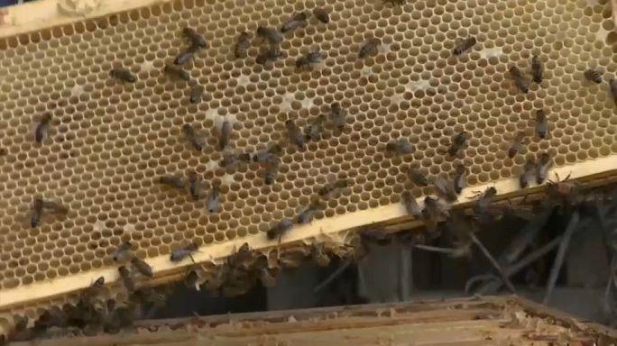 Une étude dévoile la présence de pesticides dans le miel