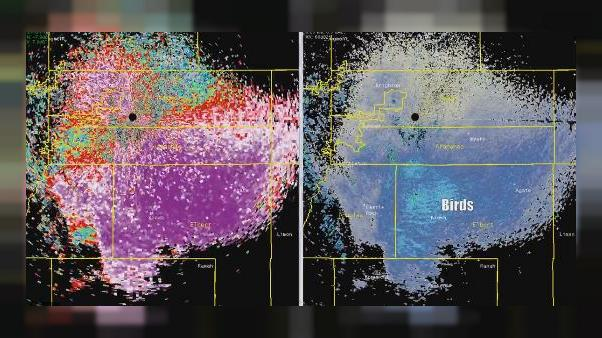 Mysterious colourful pattern on weather radar caused by butterflies