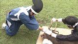 مراسم بریدن شاخ گوزنها در ژاپن