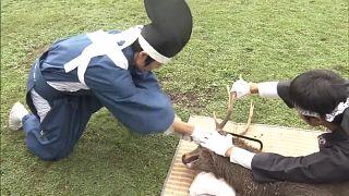 Ритуал обрезания рогов у оленей в Наре