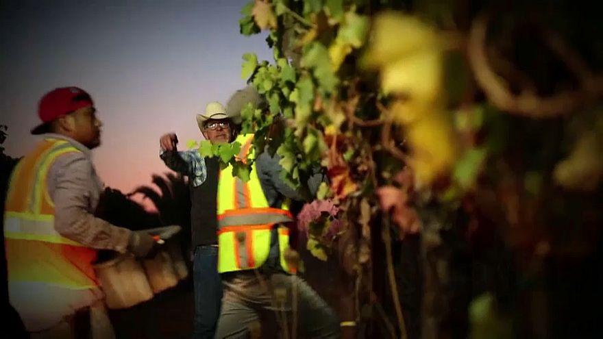 Zu heiß in Kalifornien für guten Wein