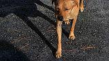 Το σκυλάκι του σχολείου που είχε χαθεί με το σεισμό επανεμφανίστηκε μόλις χτύπησε το κουδούνι