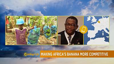 Making Africa's banana export competitive [The Morning Call]