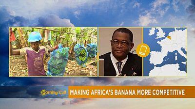 Rendre la banane africaine plus compétitive
