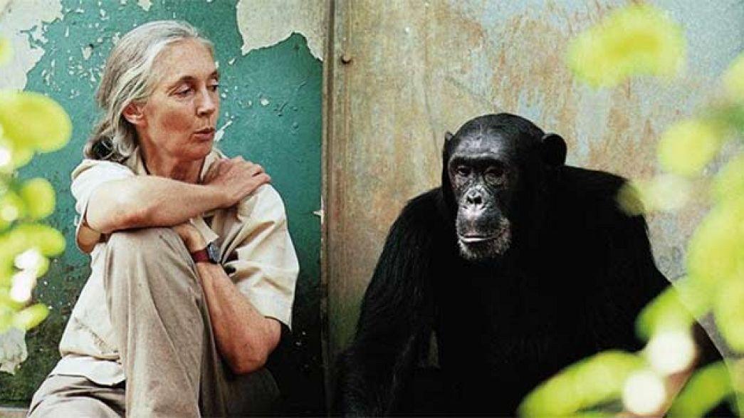 """Жизнь с шимпанзе"""