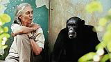 Premier of primatologist Jane Goodall biopic