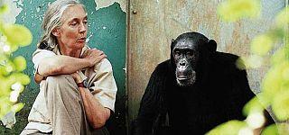 Primatolog Jane Goodall'ın hayatı beyaz perdede