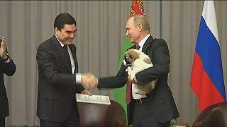 هدیه رییس جمهور ترکمنستان بمناسبت تولد ولادیمیر پوتین