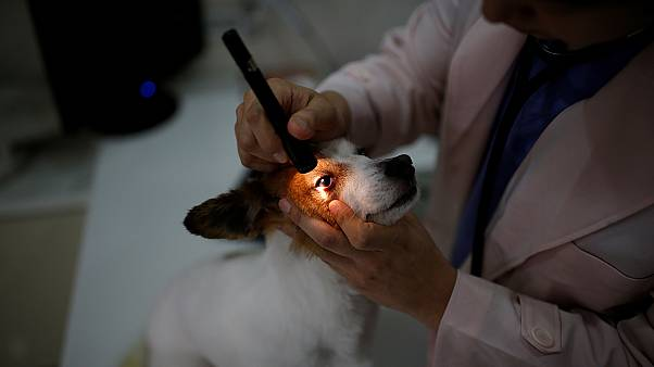 Πήρε άδεια μετά αποδοχών για να φροντίσει τον άρρωστο σκύλο της