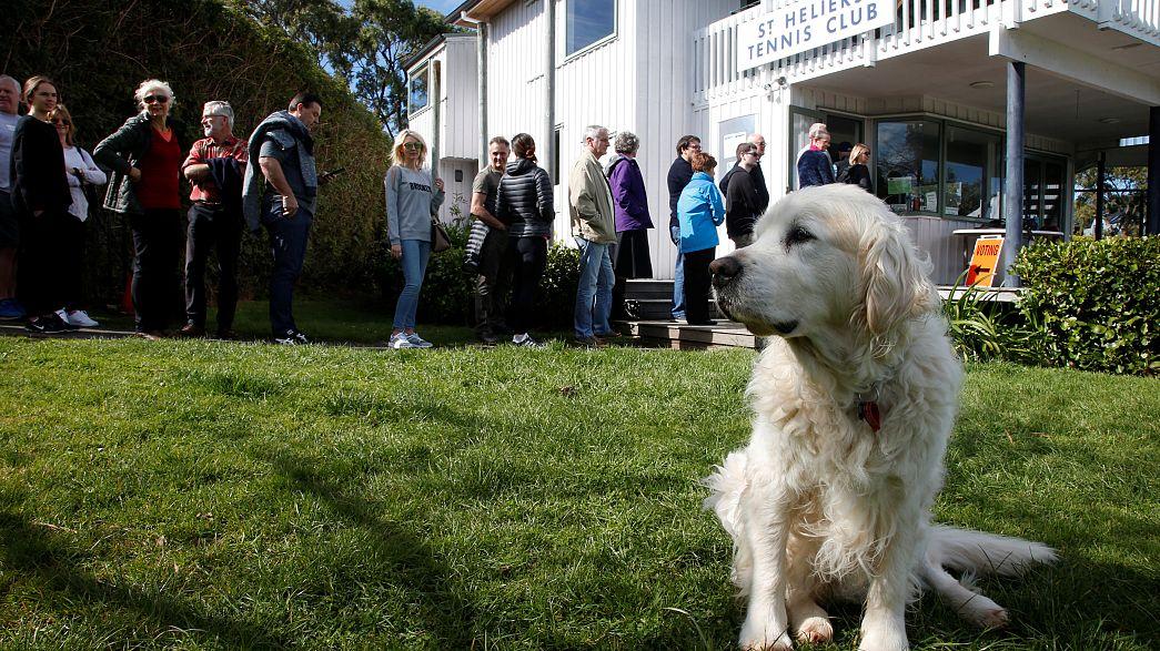 محكمة تقضي بحصول إيطالية على إجازة مرضية مدفوعة للاعتناء بكلبها المريض