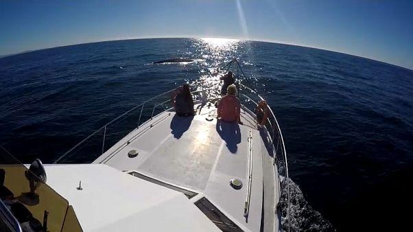 A las ballenas azules les gusta Galicia