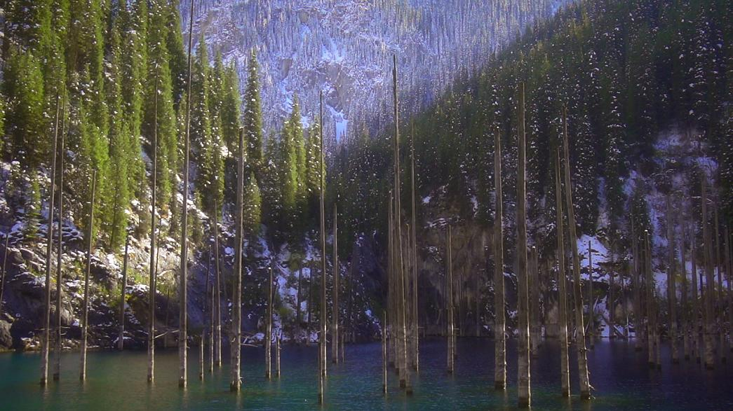 The incredible underwater Kazakh forest