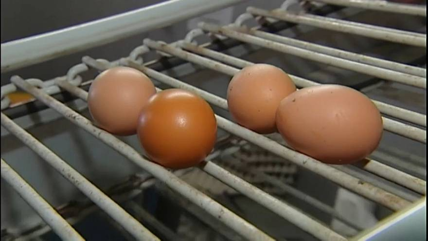 Fipronil, il prezzo delle uova alle stelle