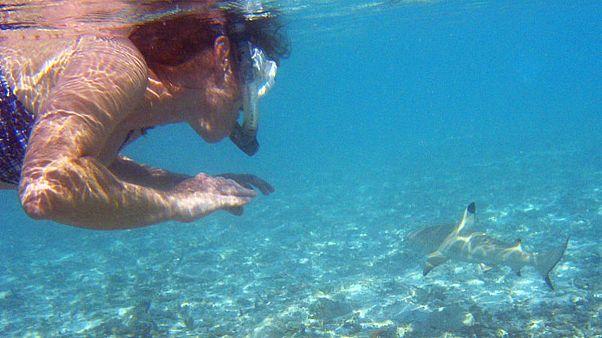 شاهد: أسترالية تمسك بيديها قرشا وتعيده إلى المحيط