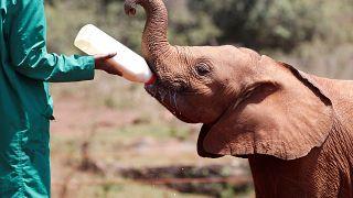 Tanzania: 128 poachers arrested in one year
