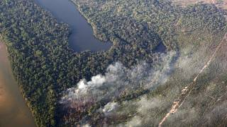 Tropical forests are oozing with carbon dioxide