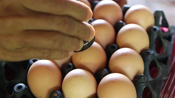 Tracciabilità: se le uova sono deposte in loco... le galline da dove arrivano?