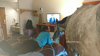 بالفيديو: حصان يتقاسم مع سيدة غرفة فندقية!