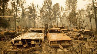 Image: wildfire