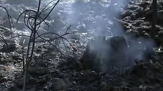 İspanya ve Portekiz'de ormanlar kül oldu