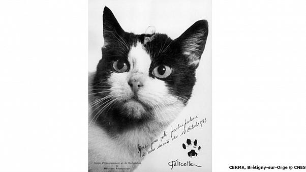 54 years since the first cat in space