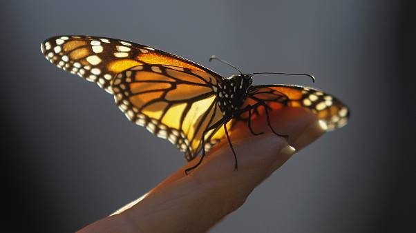 'Dramatic' decrease of flying insects awakens environmental concerns