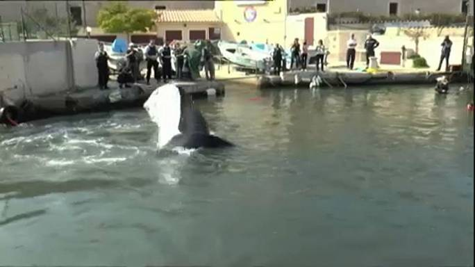 Une baleine bloquée dans le port de Marseille