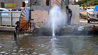 Marsilya limanında sıkışan balinanın zor anları