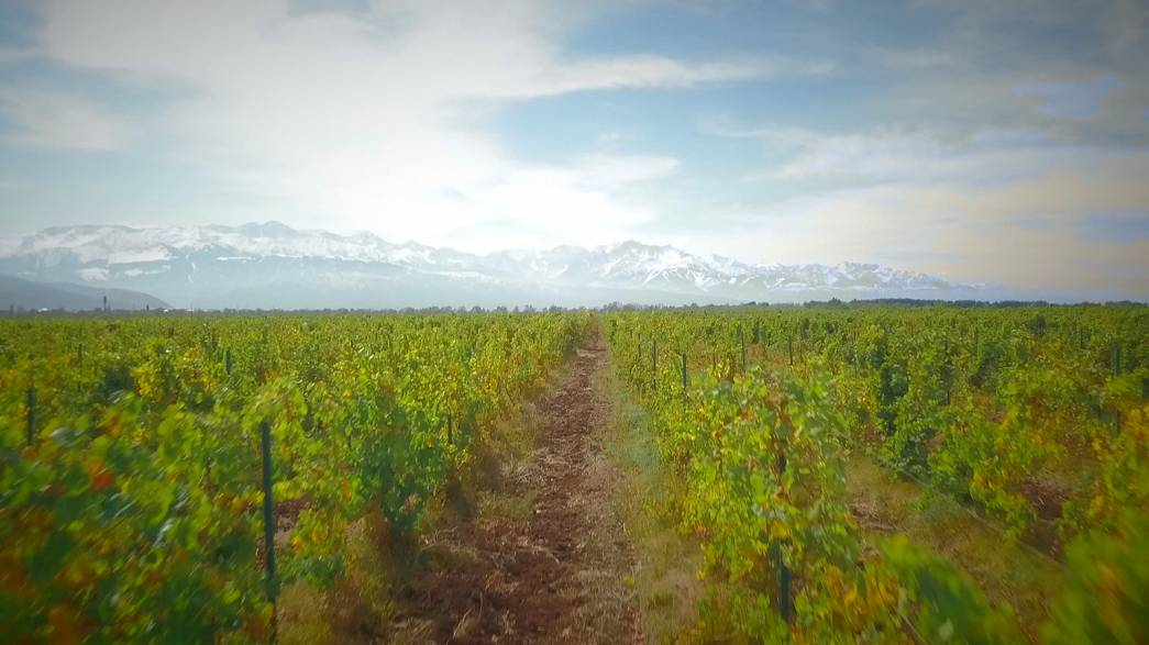 Wine-making at the foot of snow-covered Kazakh mountains