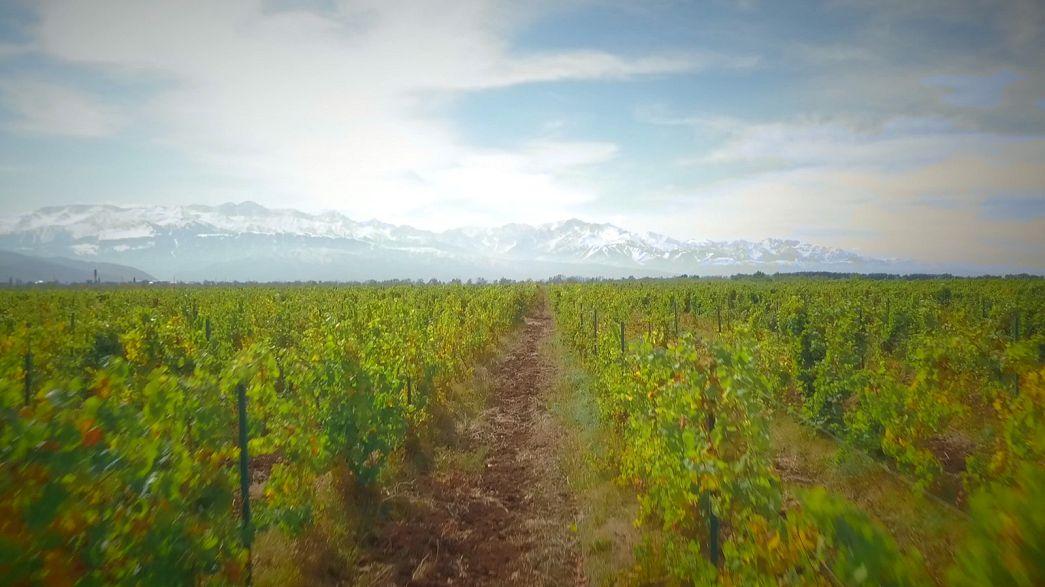 Almatı'da popüler şarap bölgesine yolculuk