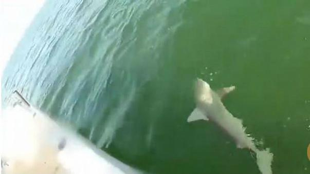 كائن بحري عجيب يسرق سمكة قرش من صياد في كاليفورنيا