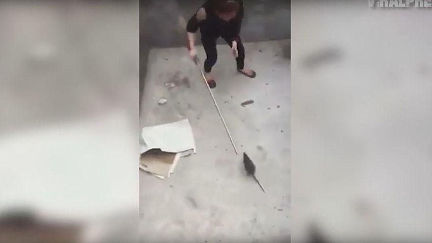 بالفيديو: مواجهة بين فتاة وفأر ضخم في حفرة.. فلمن ستكون الغلبة؟