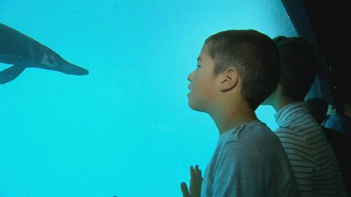 Óriás akvárium nyílt Svájcban