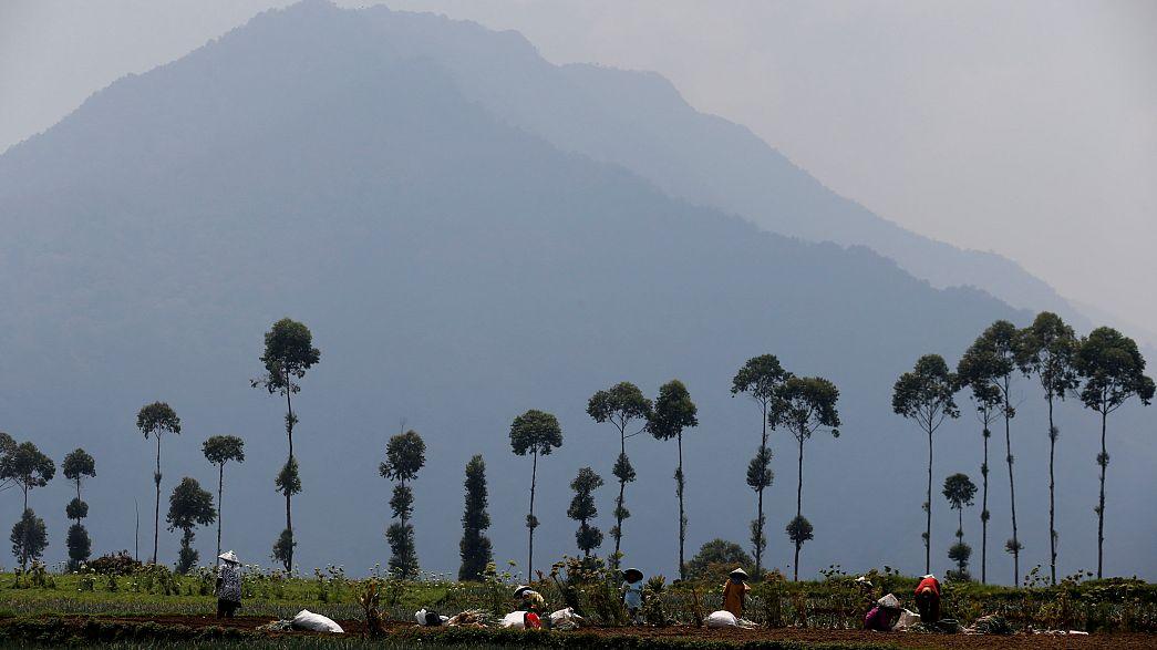قتيل وستة جرحى في حوادث إطلاق نار قرب منجم في إندونيسيا